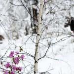 Фотоконкурс «Окно в Молдову»