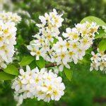 «Апрель в Ботаническом саду» фоторепортаж