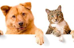 Семнадцать  кошек и две собаки